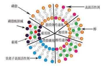 脂质体类型及结构