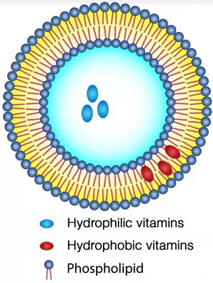 脂质体结构示意图
